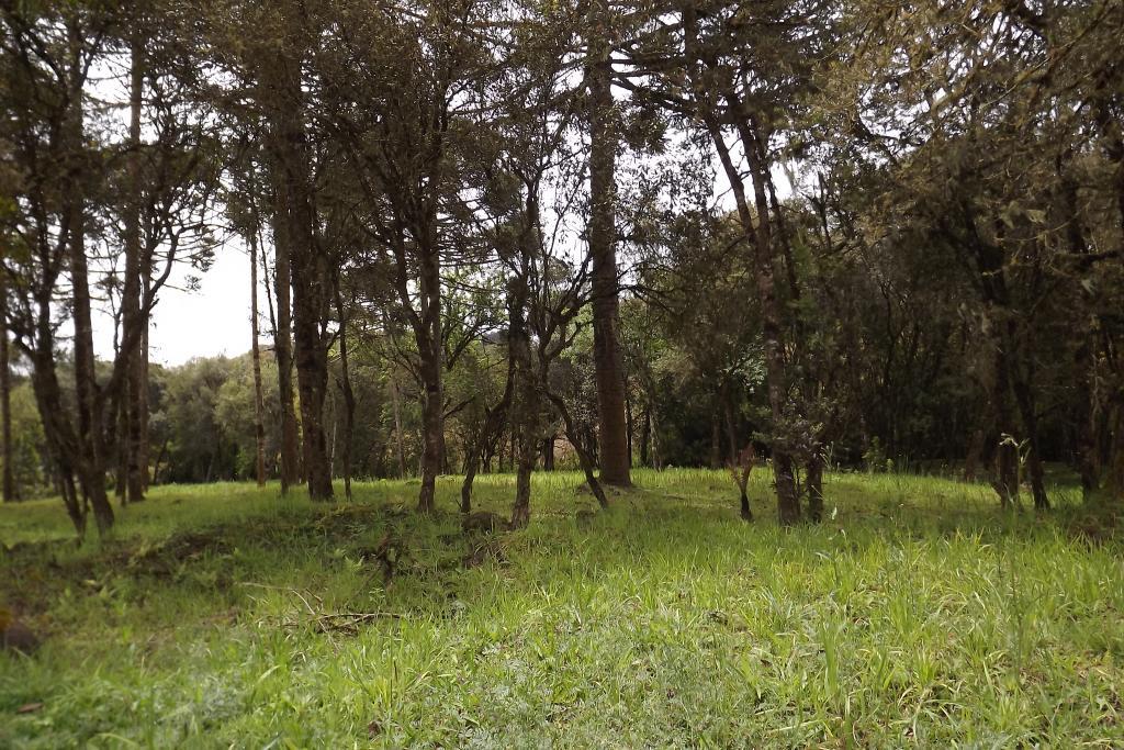 Terreno em Campo Alegre